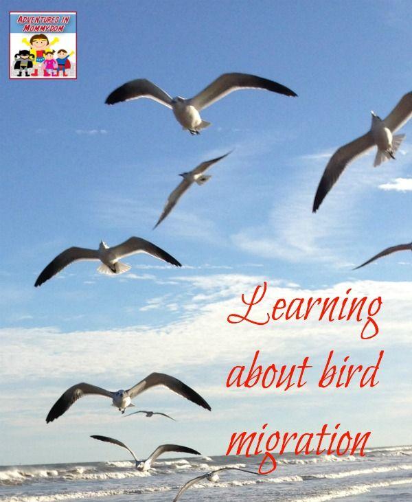 Science Sunday Bird Migration Activity Migration Activities Bird Migration Homeschool Nature Study