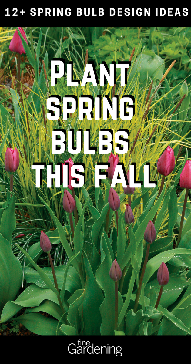 12 Spring Bulb Designs To Plant Now Plants Garden Bulbs Organic Gardening Tips