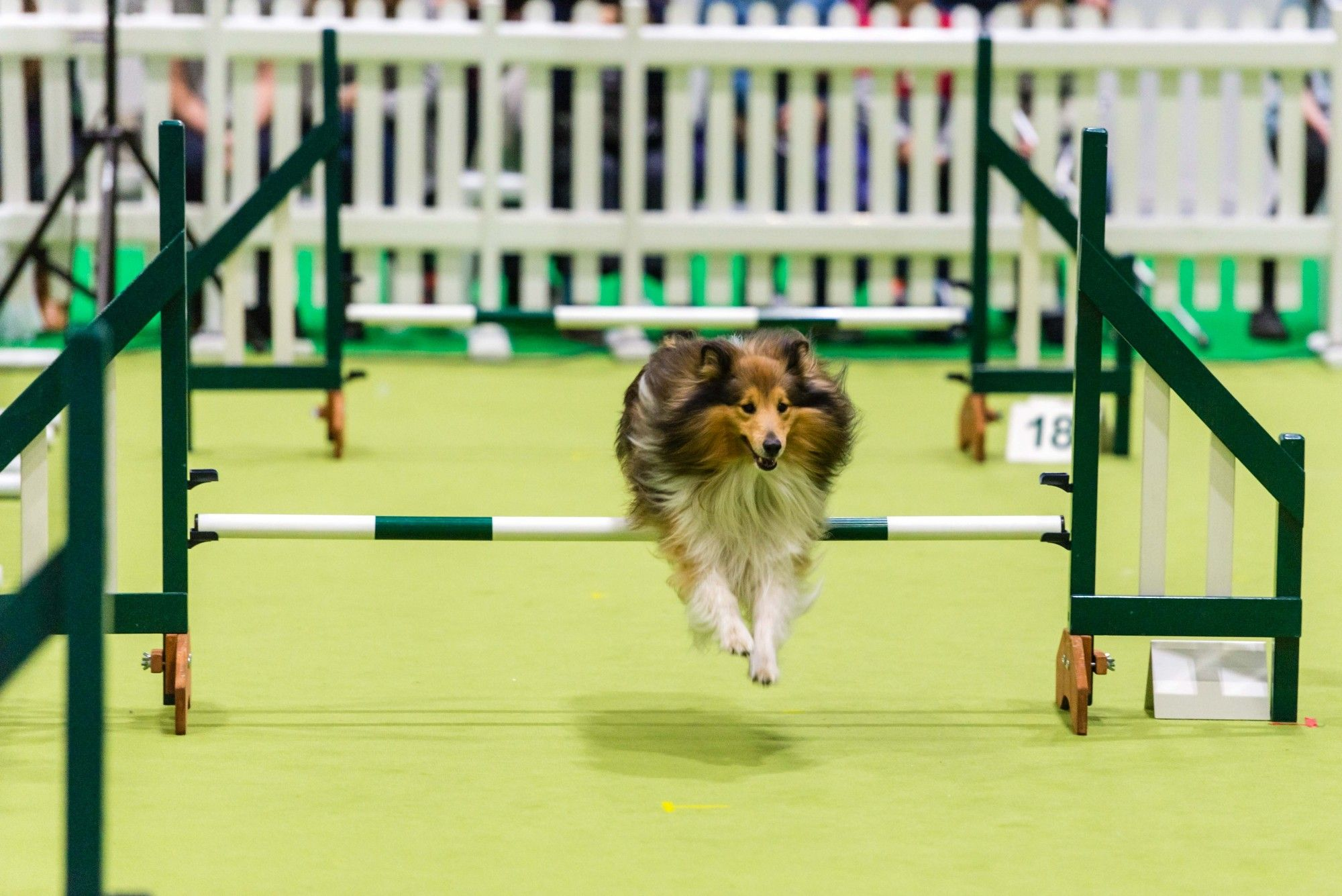 Success for National Pet Show London 2017 #NationalPetShow #dogs #dogshows #dogshowing
