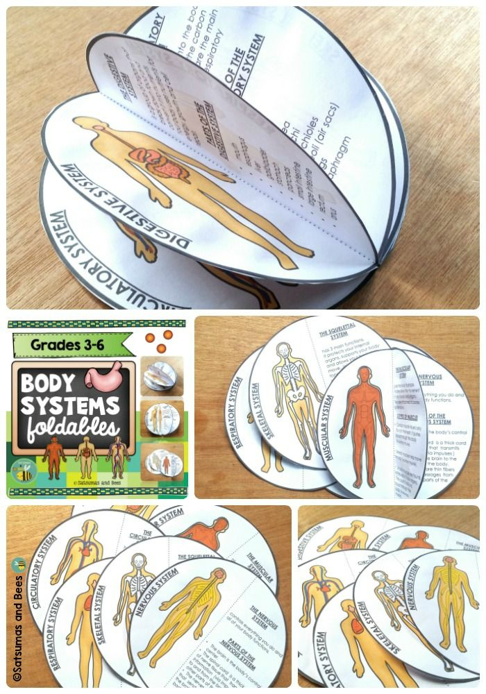 Human Body Systems foldables {Interactive Science Notebook} | TpT ...