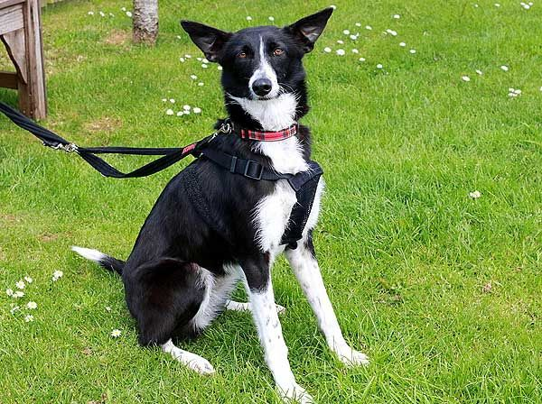 Rspca Cornwall Bess Rehome Dog Dogs Rehoming