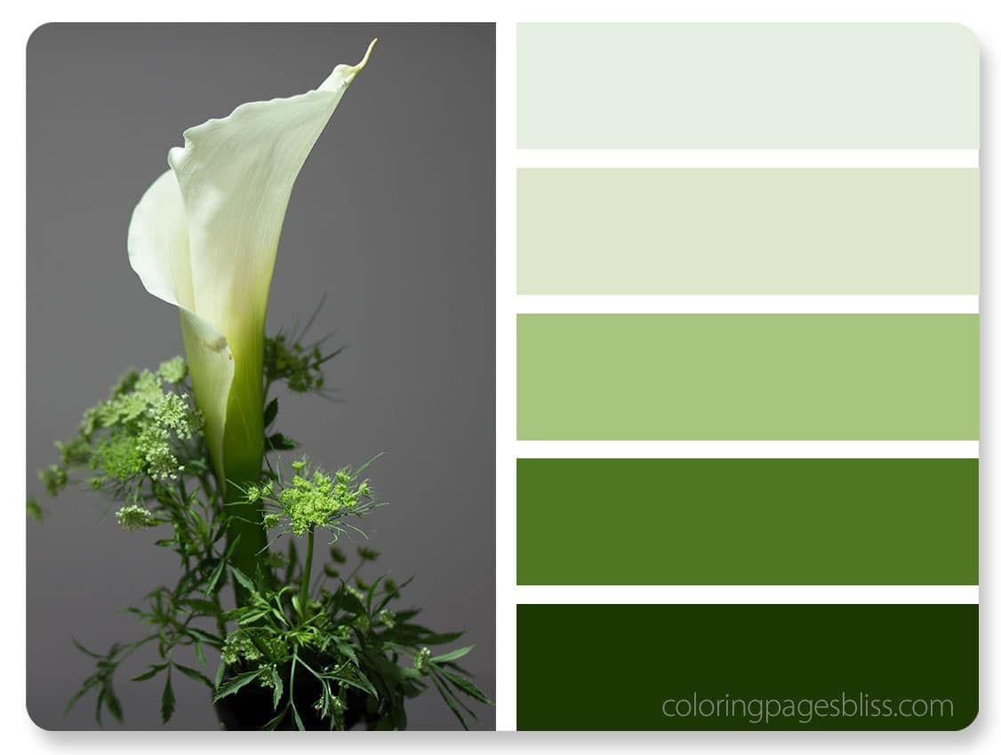 Calla Lily Flower Color Palette | Color World | Pinterest | Calla lilies