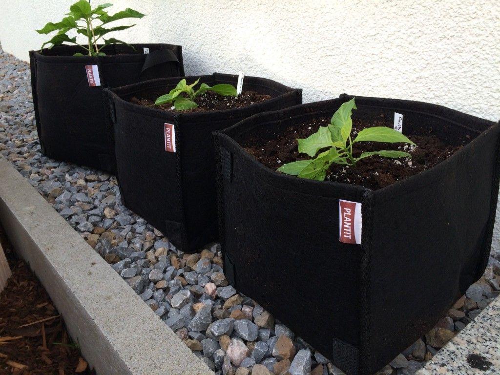 air pruning tomaten chilianbau im pflanzsack hot pepper plants all plants und stuffed. Black Bedroom Furniture Sets. Home Design Ideas