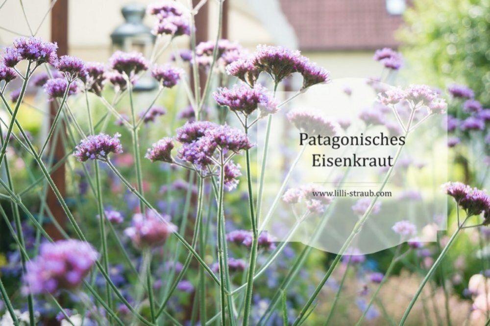 8 Pflegeleichte Pflanzentipps Lilli Straub Den Traumgarten Planen Blumen Fur Garten Garten Bepflanzen Bienenfreundlicher Garten