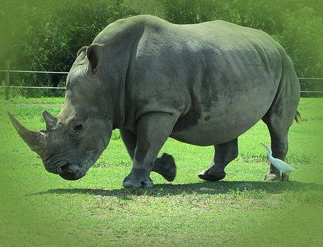 MTBobbins Photography - Rhino and Friend