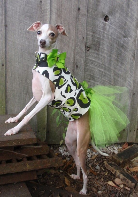 Leopard Tutu Harness Dog Dress Green By Kocouture On Etsy