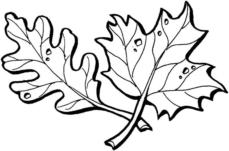 Leaf Coloring Page Practice 001 See The Category To Find More
