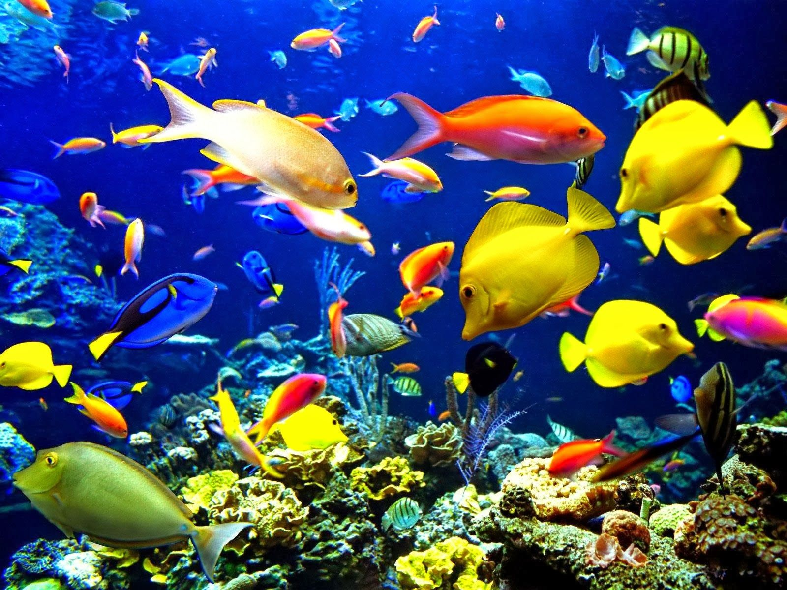 3d Moving Wallpaper Background Free Download Fish Wallpaper Sea Animals Underwater Wallpaper