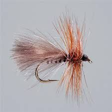 Image result for sedge fly