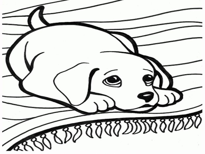 Dog And Cat Colouring Sheets Coloring Stylizr Dogs And Cats Coloring Pages 1600 X 1200 Kju Horse Coloring Pages Dog Coloring Page Animal Coloring Pages