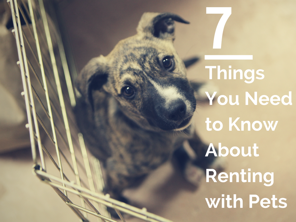 Renting With Pets Apartmentguide Pets Dog Daycare Near Me Rent To Own Homes