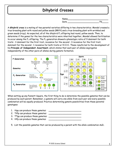 Biology Dihybrid Cross Worksheet - worksheet