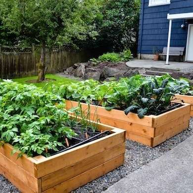30 Things Every Homeowner Should Know How To Do Vegetable Garden
