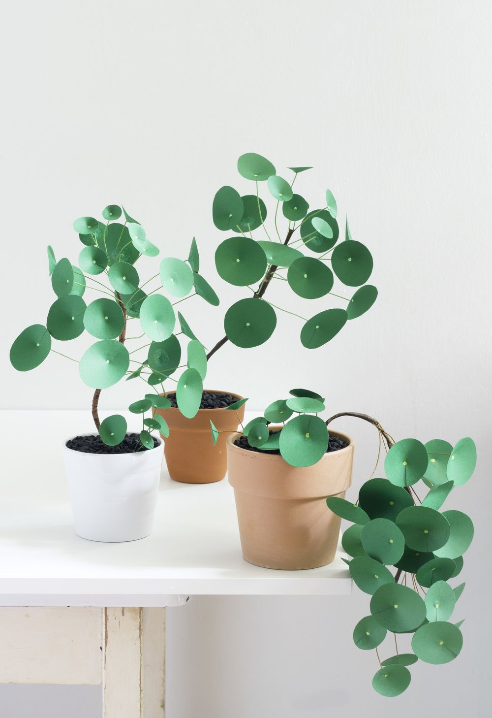 plante verte monnaie de chine