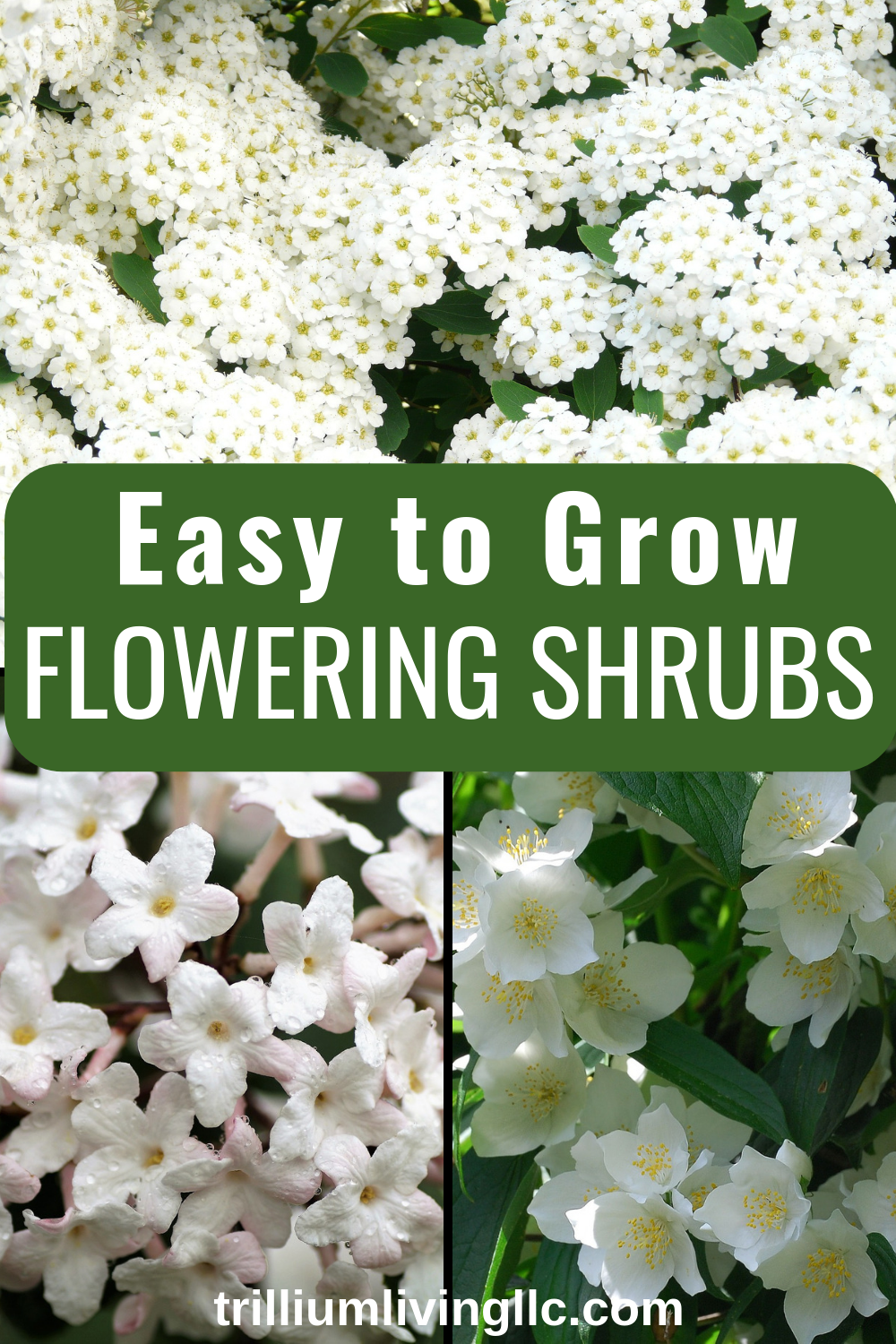 Beautiful Easy To Grow Flowering Shrubs Shrubs For Landscaping