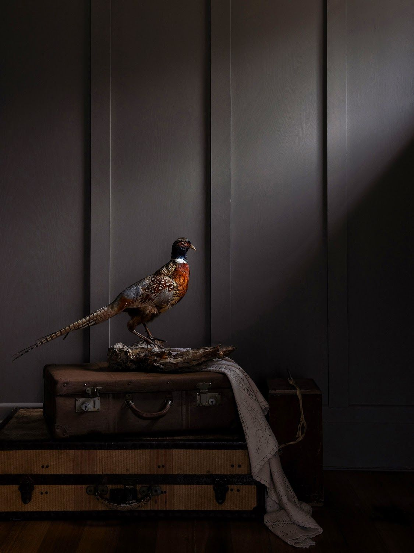 100 decors: Portfolio: Eve Wilson