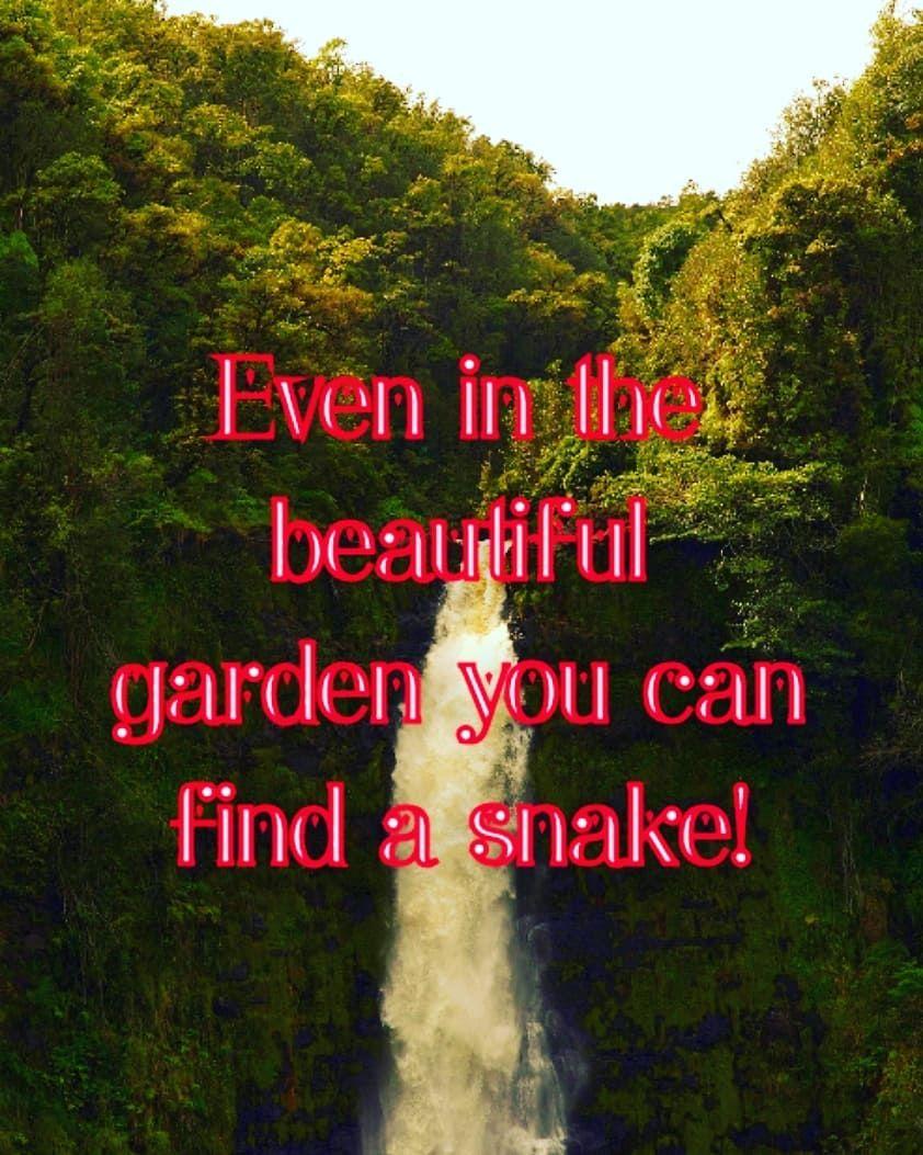 Snake Grass Quotes Wwwtopsimagescom