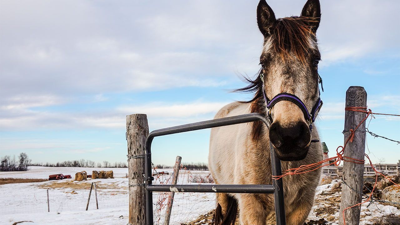 Among Many Other Animals Horses Have Also Joined The Group That Can