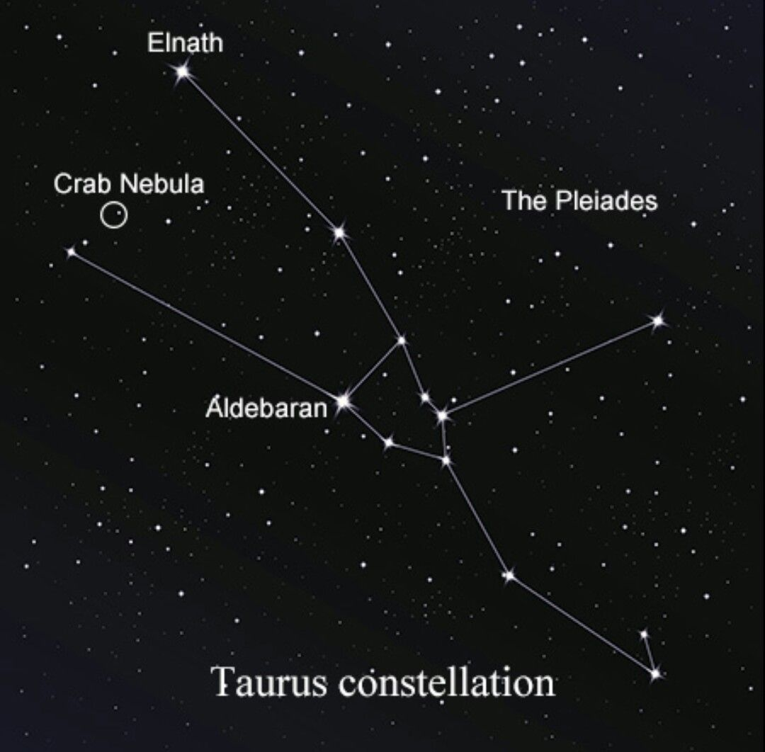 Taurus constellation tattoo   Body Art   Pinterest ...