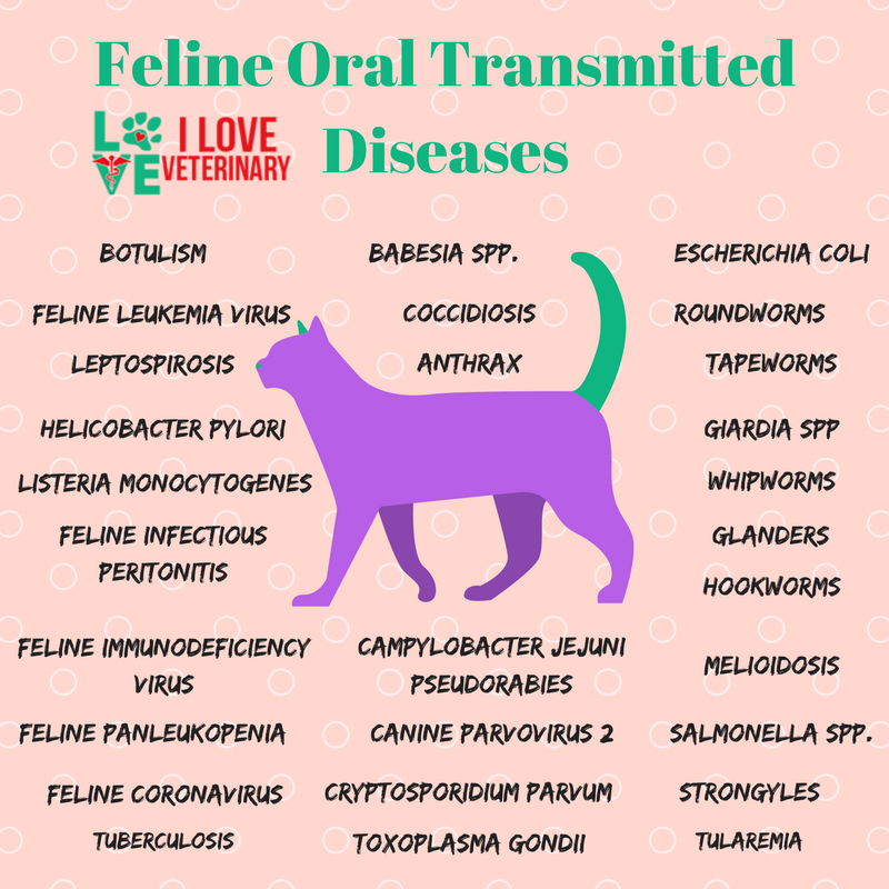 Feline Oral Transmitted Diseases Infographic Vet Medicine Vet Tech Student Veterinarians Medicine