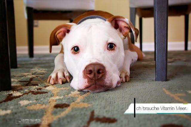 Kroatien Urlaub Mit Hund Kroatien Urlaub Mit Hund Hund Aktivitaten