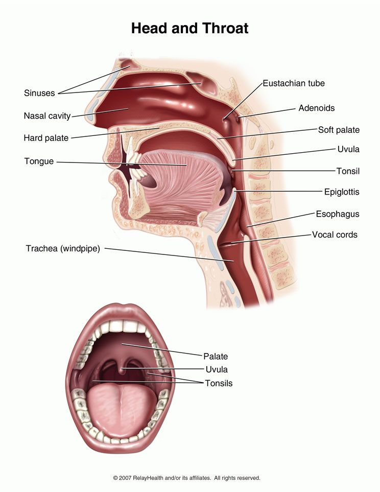 4 viruses that cause a viral sore throat and how to treat it ...