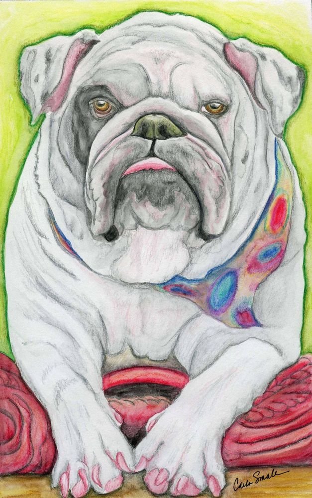 English Bulldog Dog Art Original 6 x 10 Watercolor Pencil Painting ...