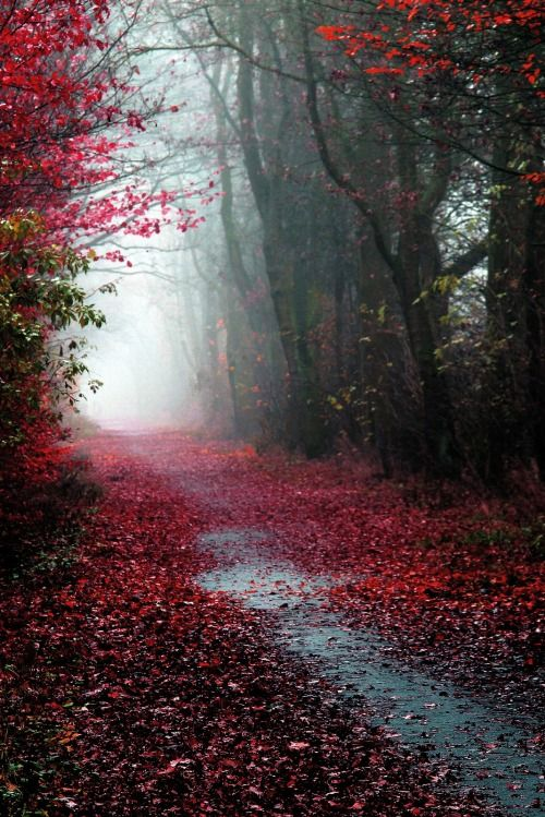 Gorgeous Red Leaves On Path Autumn Scenery Beautiful Nature Nature