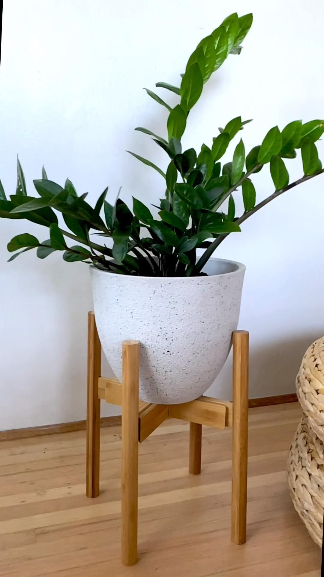 Repotting this ZZ Plant in a recycled plastic plan