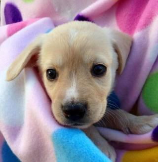 Colette Puppies And Kitties Cute Little Animals I Love Dogs