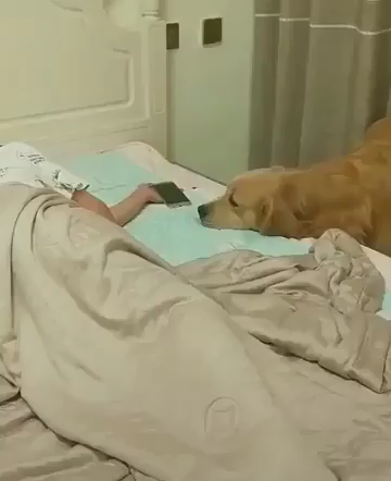 The cutest thing you'll see all day