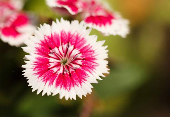 winterharte stauden obi flower power pinterest. Black Bedroom Furniture Sets. Home Design Ideas
