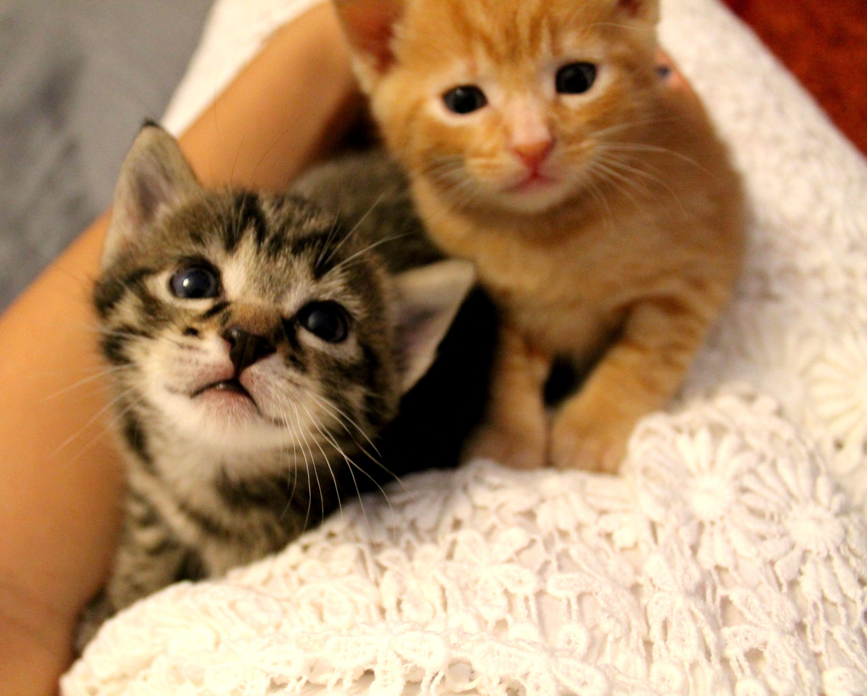 Mini meow, my lovely kittens