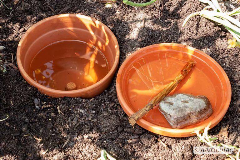 Ollas Selber Bauen Bewasserung Mit Naturlicher Tropfschlauch Alternative In 2020 Bewasserung Garten Gartenbewasserung Bewasserung
