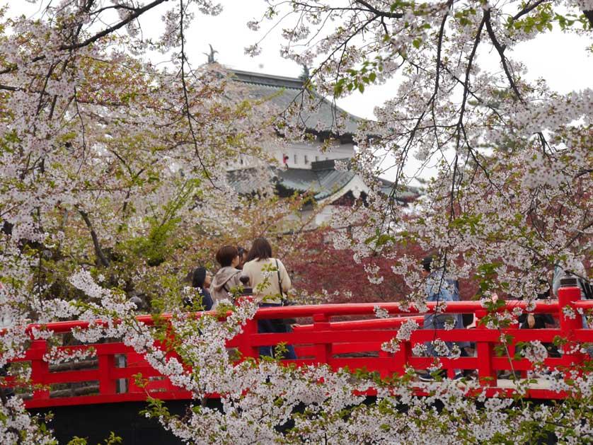 Hirosaki Cherry Blossom Festival Japanvisitor Japan Travel Guide Cherry Blossom Festival Cherry Blossom Japanese Festival