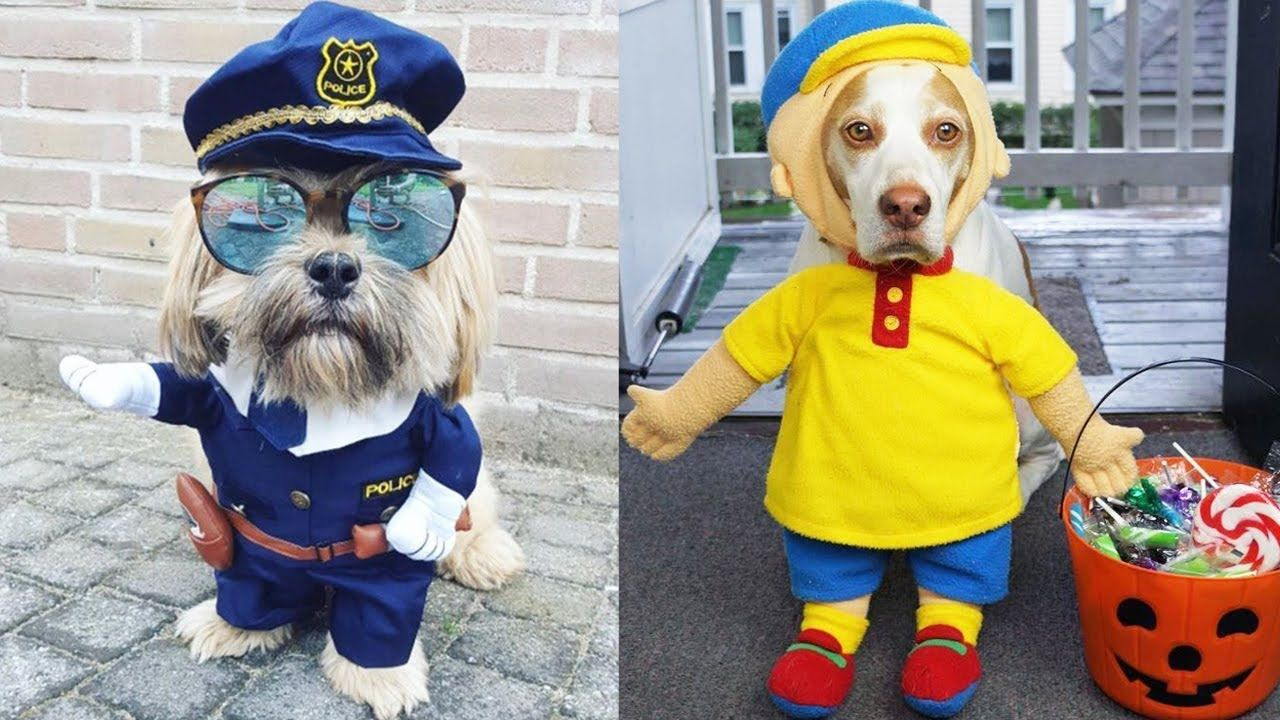 Funny Cutest Dog Costumes Compilation Cute Dog Video Cute Dog