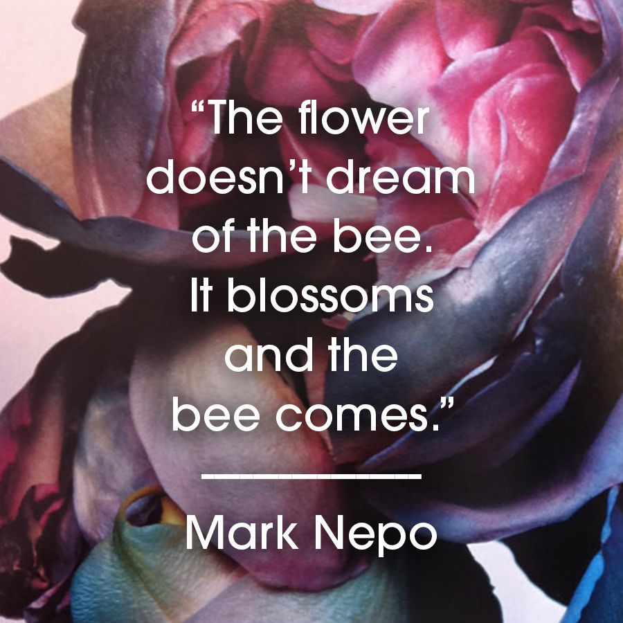 Flower Beauty Inspiration Inspiration Pinterest Happiness And