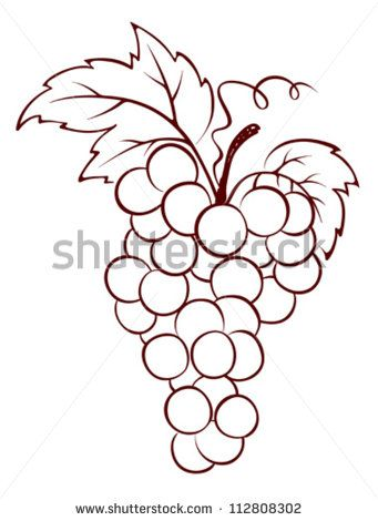 Bunch Of Grapes Grape Drawing Grape Bunch Grapes