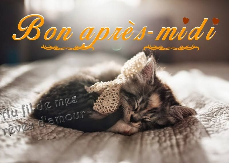 Bon après-midi #bonapresmidi chaton chat mignon sommeil repos | Bon après  midi, Après midi, Midi