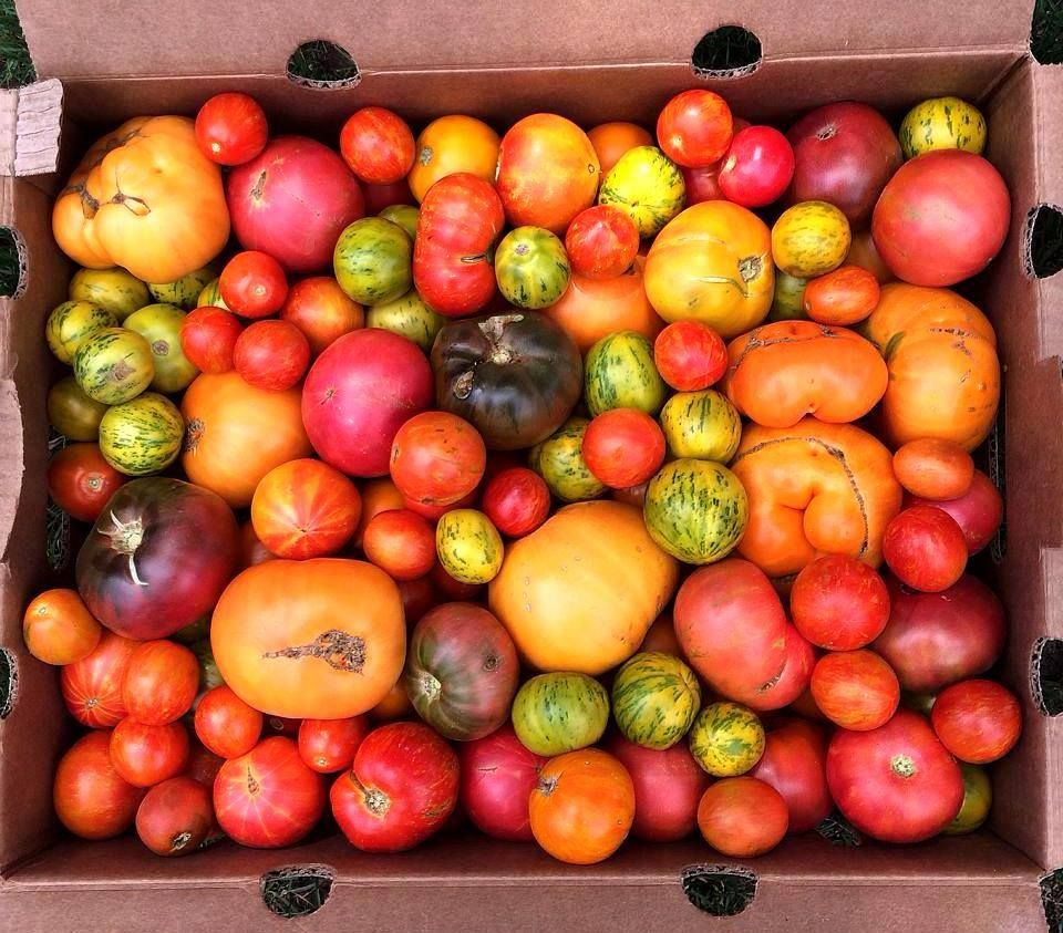 There's nothing like a sun-ripened tomato when it's in season. Learn how to use them in these great recipes: http://www.forksoverknives.com/?s=tomato.  Photo via Mindful Diabetic.