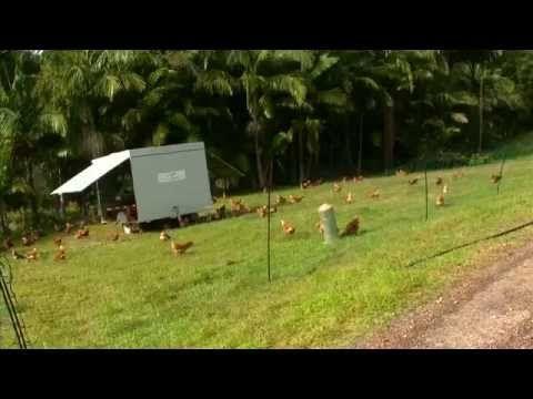 Possum Creek Farm With Chicken Caravans Free Range Chickens Chicken Farm Free Range