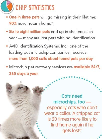 It S So Important To Microchip Your Pets Both Dogs And Cats Pet Clinic Losing A Pet Pet Health Insurance