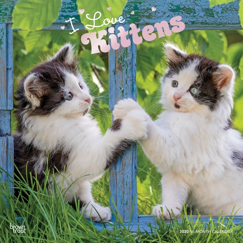 I Love Kittens 2020 12 X 12 Inch Monthly Square Wall Calendar With Foil Stamped Cover Animals Cats Kittens Feline Kittens Cats And Kittens Beautiful Kittens