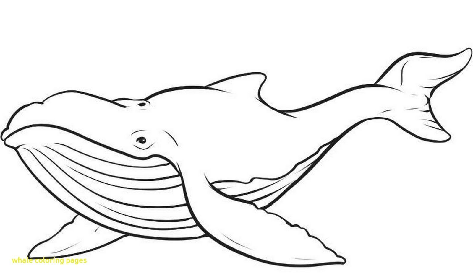 Fresh Whales Coloring Pages Collection Printable Coloring Sheet