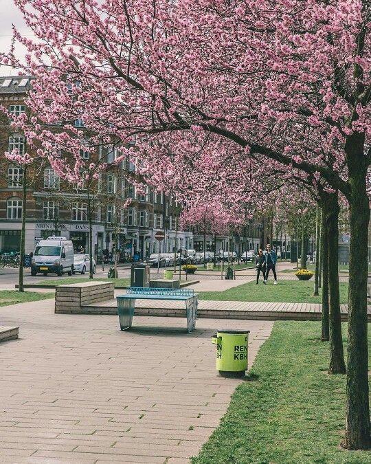 Sønder Boulevard ~ Pretty in pink, Denmark