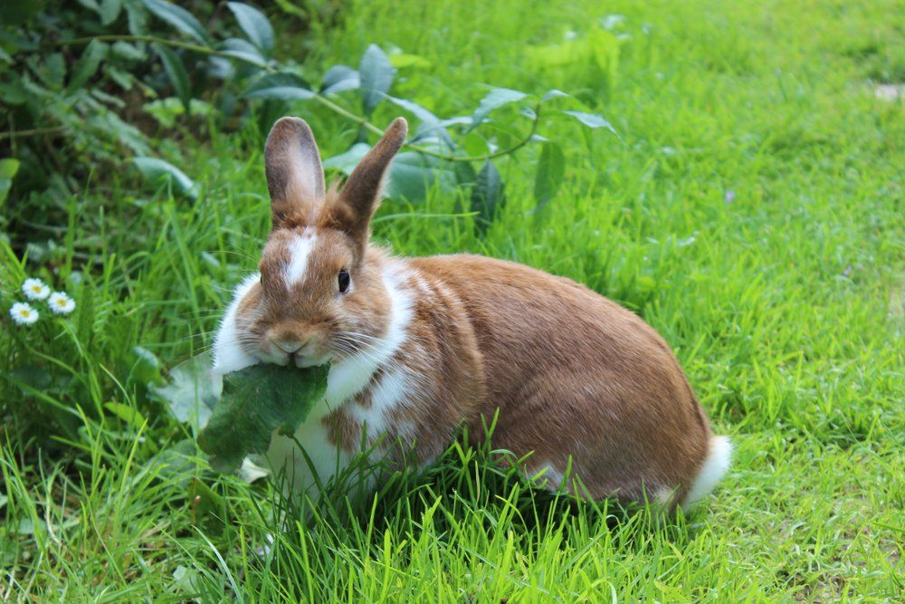 Keep Rabbits Away From Your Lawn with These Nifty Tricks is part of Perfect lawn Green - No trapping necessary!