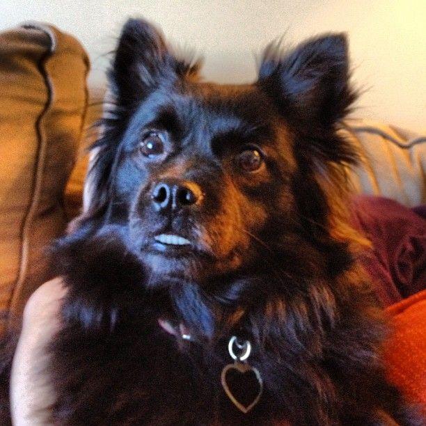 """www.prestonspeaks.com photo: """"My best friend bella! #dog"""""""