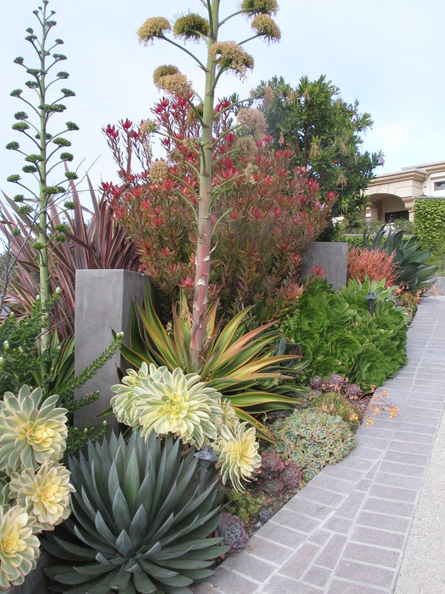 Jardins Californiens Exotiques Basileek Jardin Exotique
