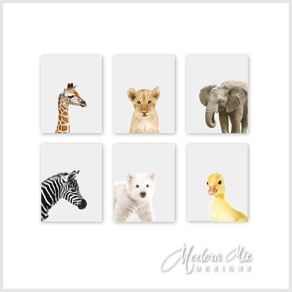 Baby Animal Prints Nursery Art Zoo Animals Jungle Decor Safari Bab