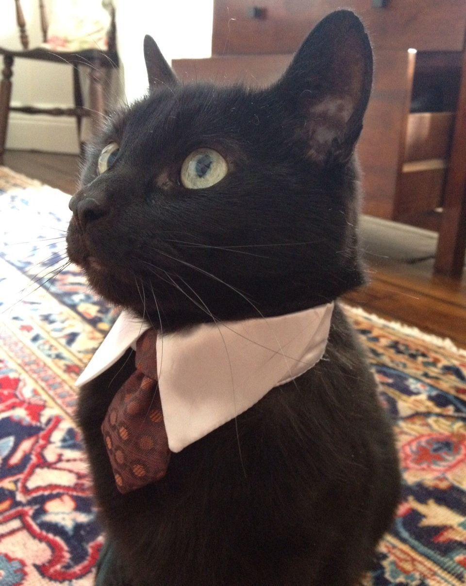 Area Cat Nervous About Job Interview While the... Cat